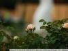 if-tokina-at-x-340-af-ii-lens-2