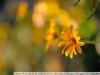 tokina-at-x-340-af-ii-lens-22