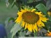 Пример фото на Nikon AF Nikkor 35-135 mm 3.5-4.5 MKI