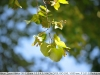 nikon-35-135-mf-ai-s-sample-lens-test-1