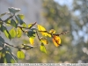 nikon-35-135-mf-ai-s-sample-lens-test-18