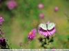nikon-35-135-mf-ai-s-sample-lens-test-25
