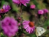 nikon-35-135-mf-ai-s-sample-lens-test-26