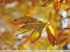 nikon-35-135-mf-ai-s-sample-lens-test-31