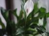 Фото на Nikon AF Nikkor 50 mm F 1.8 MK I и полнокадровую камеру