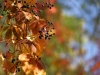 canon-eos-5d-with-yn50mm-f-1-4-samples-11