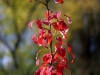 canon-eos-5d-with-yn50mm-f-1-4-samples-13