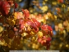 canon-eos-5d-with-yn50mm-f-1-4-samples-15