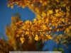canon-eos-5d-with-yn50mm-f-1-4-samples-18