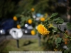 canon-eos-5d-with-yn50mm-f-1-4-samples-24