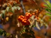 canon-eos-5d-with-yn50mm-f-1-4-samples-26