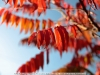 canon-eos-5d-with-yn50mm-f-1-4-samples-31