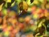 canon-eos-5d-with-yn50mm-f-1-4-samples-32