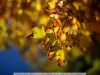 canon-eos-5d-with-yn50mm-f-1-4-samples-33