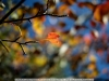 canon-eos-5d-with-yn50mm-f-1-4-samples-40