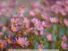 canon-eos-5d-with-yn50mm-f-1-4-samples-44