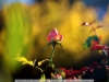 canon-eos-5d-with-yn50mm-f-1-4-samples-45