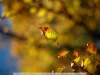 canon-eos-5d-with-yn50mm-f-1-4-samples-49