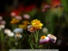 canon-eos-5d-with-yn50mm-f-1-4-samples-51