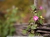 canon-eos-5d-with-yn50mm-f-1-4-samples-52