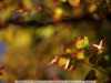 canon-eos-5d-with-yn50mm-f-1-4-samples-54