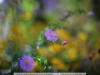 canon-eos-5d-with-yn50mm-f-1-4-samples-56