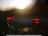 canon-eos-5d-with-yn50mm-f-1-4-samples-58