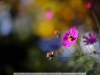 canon-eos-5d-with-yn50mm-f-1-4-samples-62