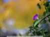 canon-eos-5d-with-yn50mm-f-1-4-samples-64
