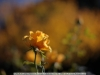 canon-eos-5d-with-yn50mm-f-1-4-samples-67