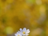 canon-eos-5d-with-yn50mm-f-1-4-samples-69