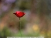 canon-eos-5d-with-yn50mm-f-1-4-samples-70