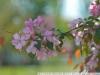 Фотография на объектив Nikon 70-200 F2.8 VR 2