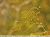 nikon-lens-series-e-zoom-75-150mm-3-5-mk2-lens-sample-test-11