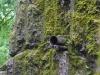 Пример фото на Sony Alpha 7r