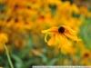 Пример фото на Nikon 80-200 mm AF Nikkor F 4.5-5.6 D