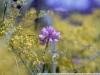 Фото на Nikon AF N8008s