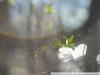 Пример фото на ЮПИТЕР-8М 2 53