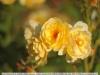 auto-takumar-55-2-lens-image-10
