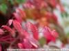Фото на Biometar 2.8 120