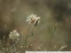 Фото на Biotar 2 58 T