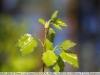 canon-lens-ef-50mm-f-1-8-mki-sample-image-23