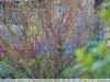 canon-lens-ef-50mm-f-1-8-mki-sample-image-41