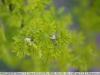 canon-lens-ef-50mm-f-1-8-mki-sample-image-48