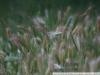 Пример фото на CANON LENS FD 135mm f3.5