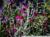фото на CANON LENS FD 135mm f3.5