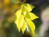 Фото на Canon EF-S 18-55mm f3.5-5.6