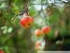 Фото на Canon EOS 30D