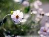 Фото на Canon 350D