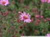 Фото на Canon STM 40mm 2.8
